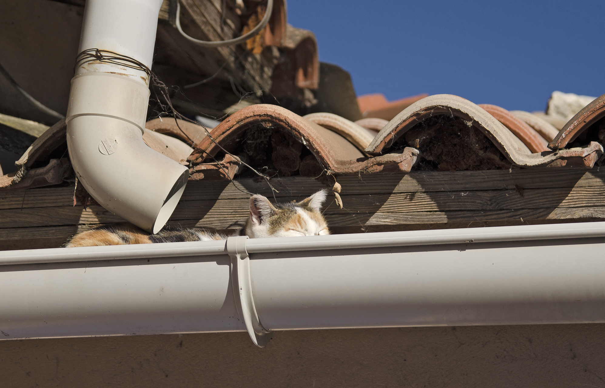 cat sleeping in the gutter