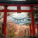 Torii and Mount Fuji with Cherry Blossoms, Japan