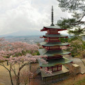 Pagoda at Shiogama Shrine, during season of Hanami, Japan
