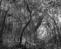 Black and white photo of a hiking traiil on Yakushima Island, Japan
