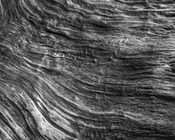 closeup photo of wood grain on Yakushima island, Japan