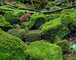 Photo of moss covered rocks on Yakushima island, Japan
